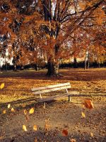 Autumn bench by FrantisekSpurny