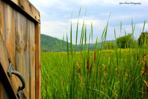 Wildlife Observation Blind by GlassHouse-1