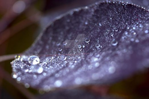Wet Leaf by AfroGunmann