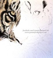 TIGER -  COLOURED PENCIL by GemmaFurbank
