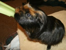 Delicious Celery by MadForHatters