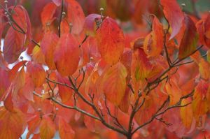 Wet Autumn Color 11-6-12 by Tailgun2009