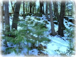 Winter Forest by Hayes-Designs