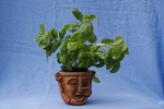 DSC09117 Pot of Basil by wintersmagicstock