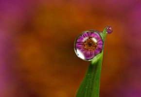 Dew Drop Refractions 3 by Alliec