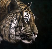 tiger colorpencil On the prowl by rasberry6