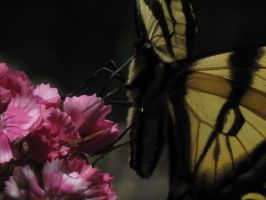 My front yard Butterfly 4 by Fallonkyra
