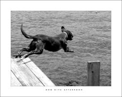 Dog Dive Afterneoon by curtg