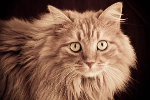 Neon  the cat by CarloNs