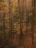 Golden forest by yuushi01
