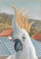 ACEO Cockatoo by robertsloan2