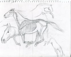 horse study by BettyPimm