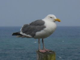 Non Amused Seagull by TheFelineAlchemist