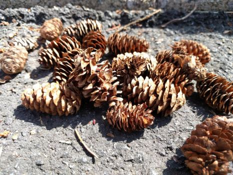 Pinecone Cluster by dreamwriter12