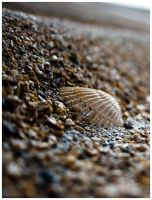 M078 :: I see sea shells... by mr-MINTJAM