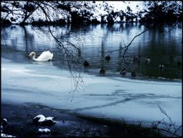 Swan on frozen lake VI by Ilmatarja