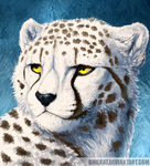 Snowy cheetah by Chilkat