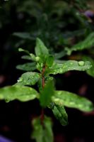 Raindrops are fallin' on my leaves by ShineeDragon