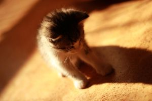 Kitten and the shadow by MilanVopalensky