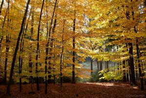 autumn forest by FeenoGraphie