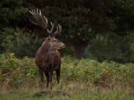 Red Deer 04 - Sept 10 by mszafran