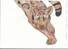 Clouded Leopard by Aquiavel