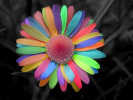 Rainbow Daisy by secretgal1234
