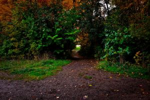 The Path Less Traveled by Hjoranna