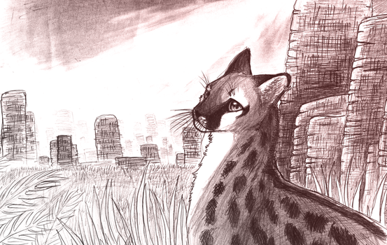 a cat in the wild by koru1243