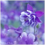 Lullaby For Columbine by CecilyAndreuArtwork