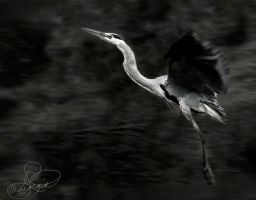 Great Blue Heron by ForeverCreative