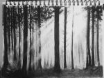 Forrest by elymont