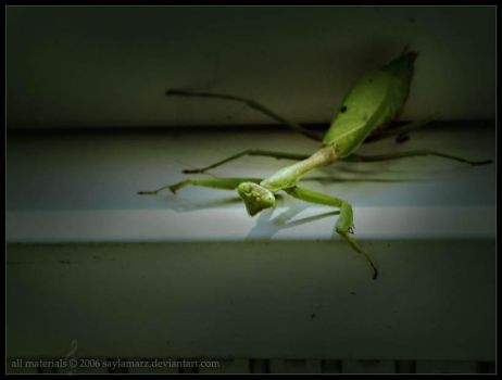 Mantis, Playing. by SaylaMarz