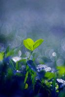 Clover by Justine1985