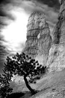 Rocks and Trees by Jackal7x