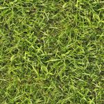 Seamless grass texture by hhh316