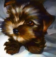 dog_speedpaint by razvanmatei