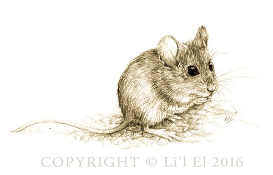 Australian Field Mouse by Lil-el-art