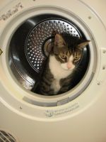Oliver in the Dryer by bonzaboy