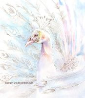White peacock by lazygirl-29