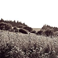 landscape in sepia 2 by mirop