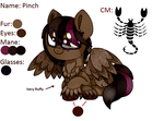 [MLP] Pinch (reference sheet) by Amberpon3