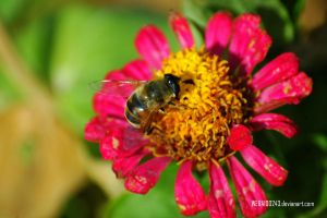 Bee by wera100243