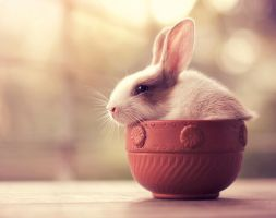 Bunny Tea by arefin03