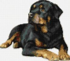 Rottweiler Cross-Stitch by Hraygurl