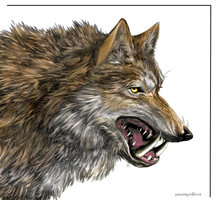 Dire Wolf - Color by Feralkyn