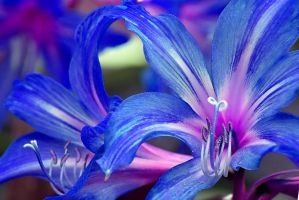 Technicolour Dream Flower IX by Questavia