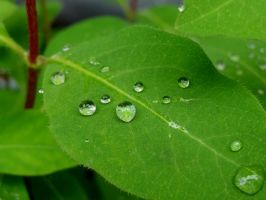 Water drops on leaves 15 by eco6org