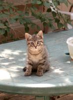 Patio table kitten by Ripplin