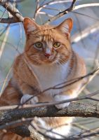 Treed Kitty 1-8-14 by Tailgun2009